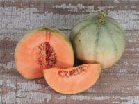 Дыня Шаранта (Charentais melon)