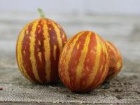 Дыня Кладовая сладости 132 / Rich Sweetness 132 Melon / Cucumis melo