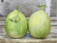 Дыня Белый Креншоу (Crenshaw Blanco melon)