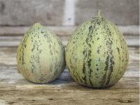 Дыня Крейн (Crane Melon)