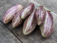 Адрианопольский фиолетовый полосатый баклажан / Edirne Purple Striped eggplant