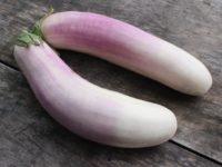 Баклажан Кашмира / Kashmiri Brinjal eggplant Solanum melongena