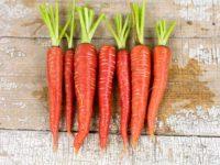 Атомная красная морковь / Atomic Red carrot Daucus sativus