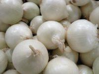 Лук репчатый Альбион F1 Allium cepa
