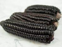 Черная кукуруза инков / Black Incan Corn / Zea mays