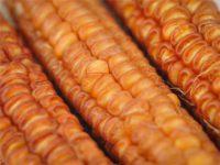 Бронзово-оранжевая кукуруза / Bronze Orange Corn / Zea mays