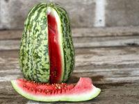Арбуз Полосатый павлин Peacock Striped Watermelon