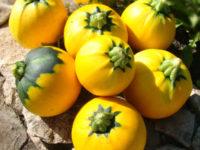 Кабачок Апельсинка