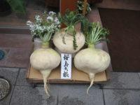 Гигантская редька Сакураджима / Sakurajima Giant Radish / Raphanus sativus subsp. acanthiformis