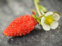 Плодовые и ягоды