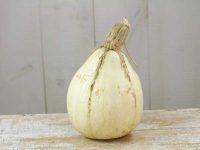 Сладкий картофельный сквош из Тенесси / Tennessee Sweet Potato Squash / Cucurbita mixta