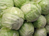 Капуста Лосиноостровская 8 / Brassica oleracea