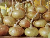 Лук Бессоновский метсный / Allium cepa
